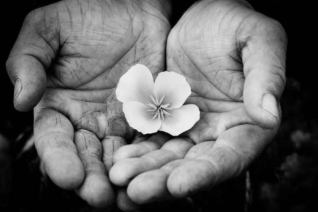 gentleness2